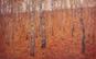 Tablou- Prin padurea lui Klimt